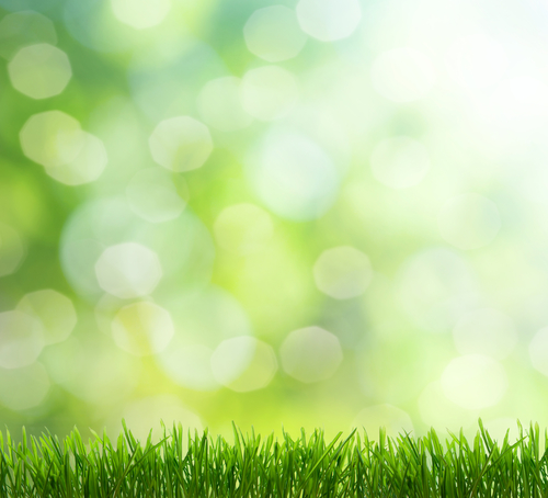 Don't Miss the Window for Dethatching and Aerating your lawn