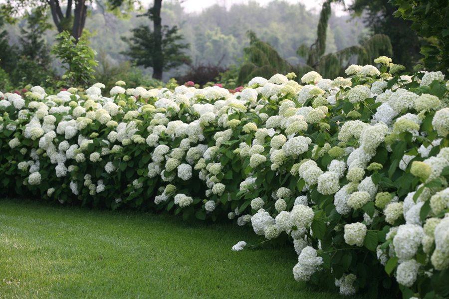 10 Wonderful Plant Choices for Colour