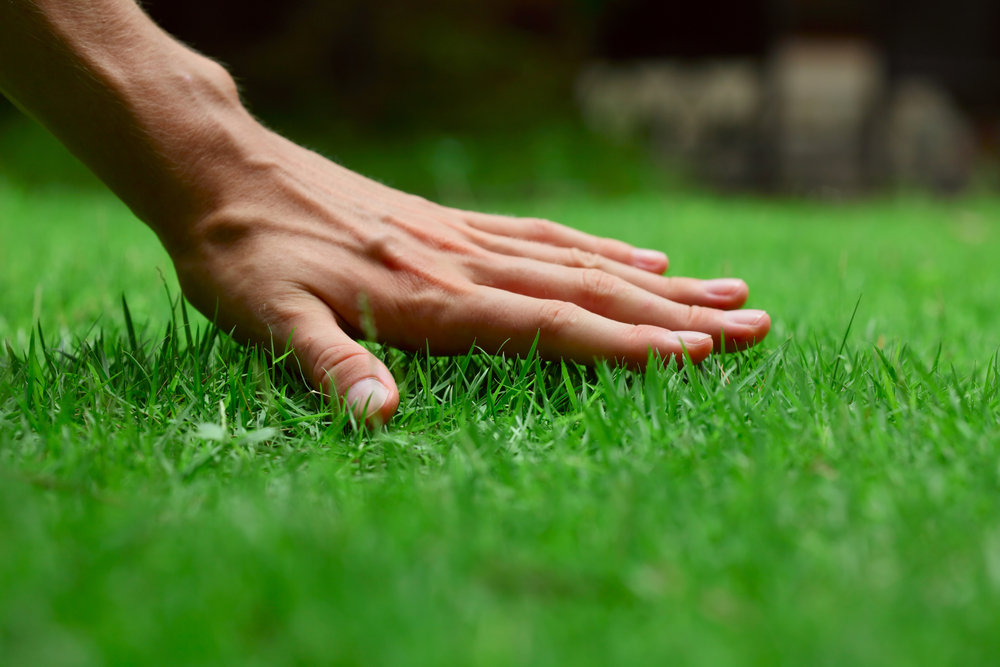 Preparing Your Lawn and Garden for the Summer Begins Today